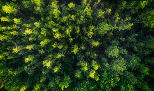 drone aerial view of a forest