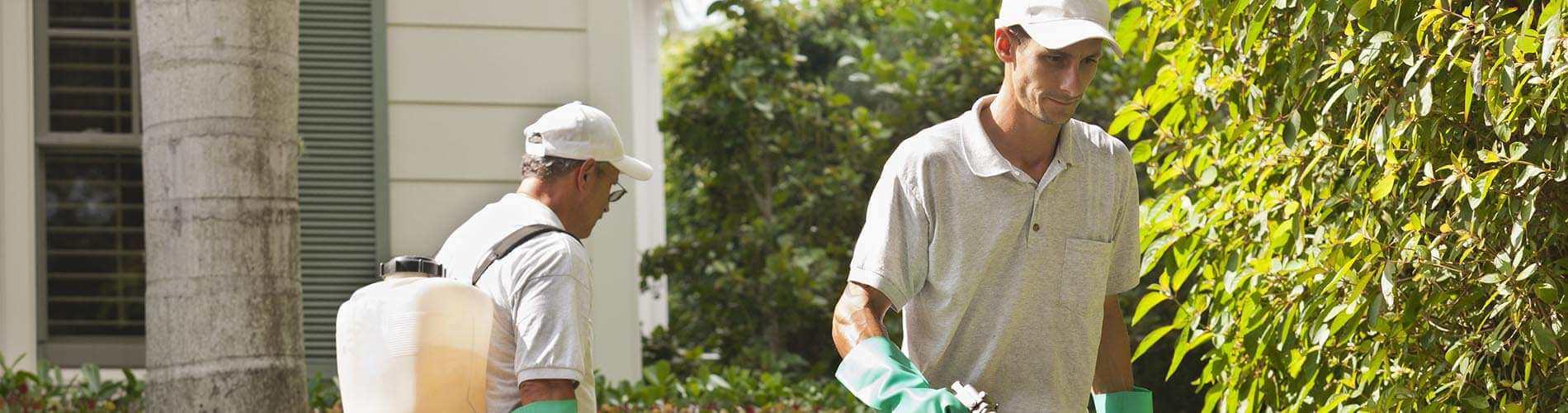 Two men spraying yard