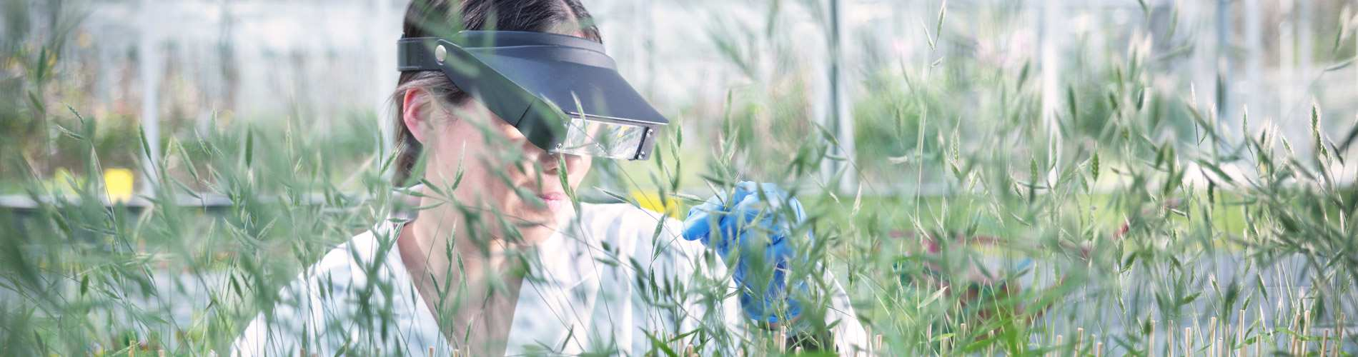 researcher looking at plants
