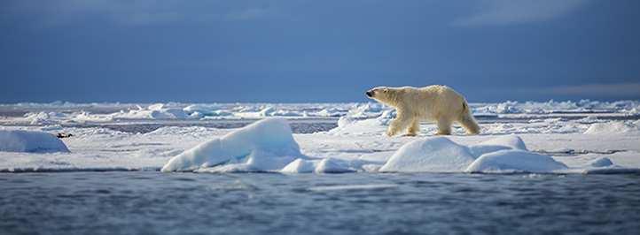 Monitoring Polar Bear Tracks