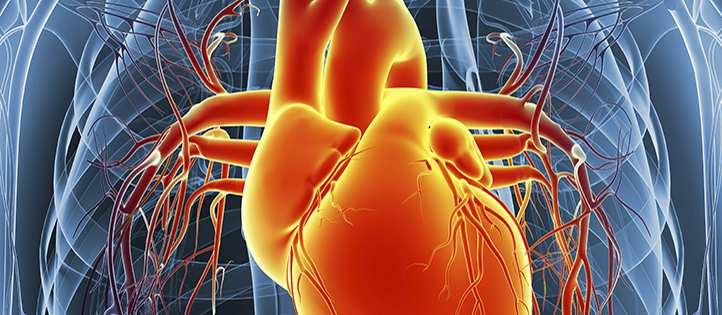 Graphic of orange heart.